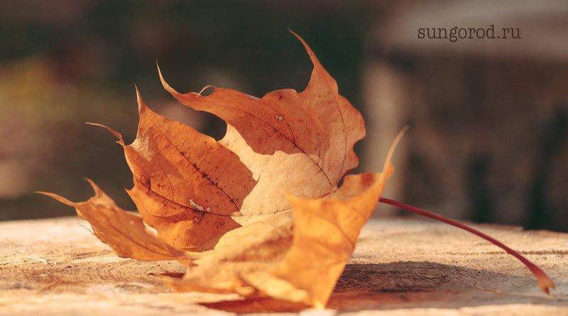 #Солнечногорск несколько осенних фото
